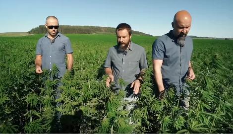Видео: Плантации конопли на миллионы долларов в Пензе