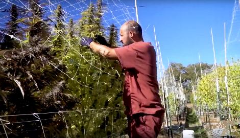 Видео: Жизнь на ферме каннабиса в Южном Орегоне