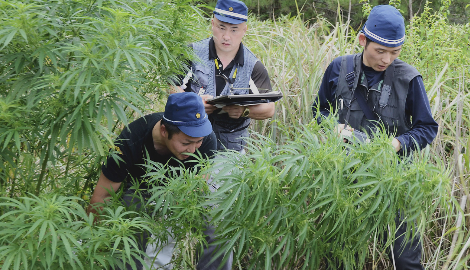 Япония произвела рекордное количество арестов из-за каннабиса