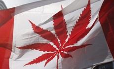 Блог Paradise Seeds: все ли так безупречно в Канадской легализации