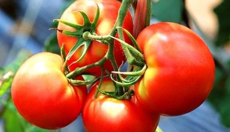 Ученые: помидорки в холодильнике теряют вкус