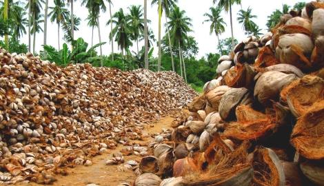 Снова о кокосе. Сквозь призму опыта