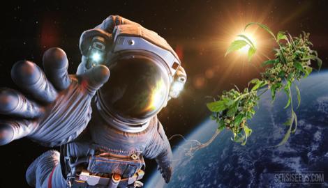 Каннабис в космосе. Часть 1