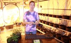 Технологичные горшки для растений