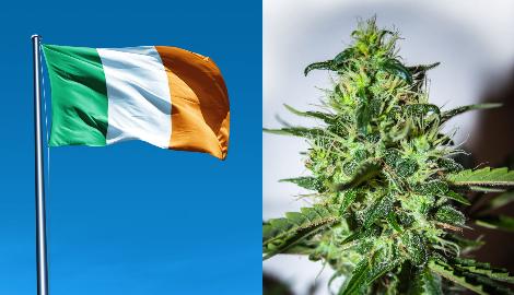 Последствия пандемии: Ирландия променяла кокс на марихуану