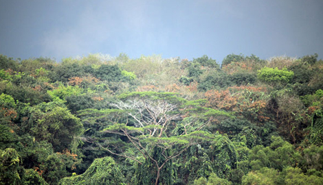 Тропические леса амазонки сами вызывают для себя дожди