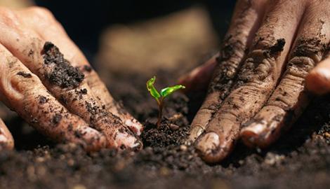 7 причин выращивать mj для себя