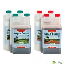 canna-aqua-vega-flores-d1a.jpg