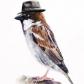 SparrowDjan