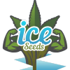 IceSeeds