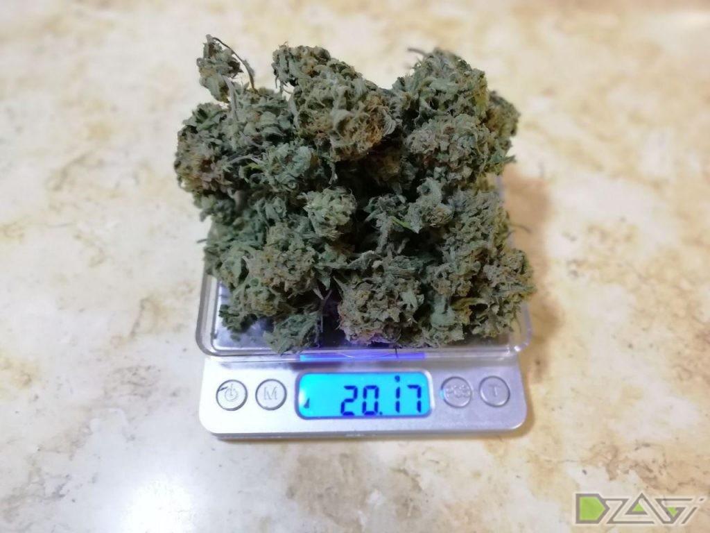 Как измельчить шишки марихуаны когда подкармливать коноплю