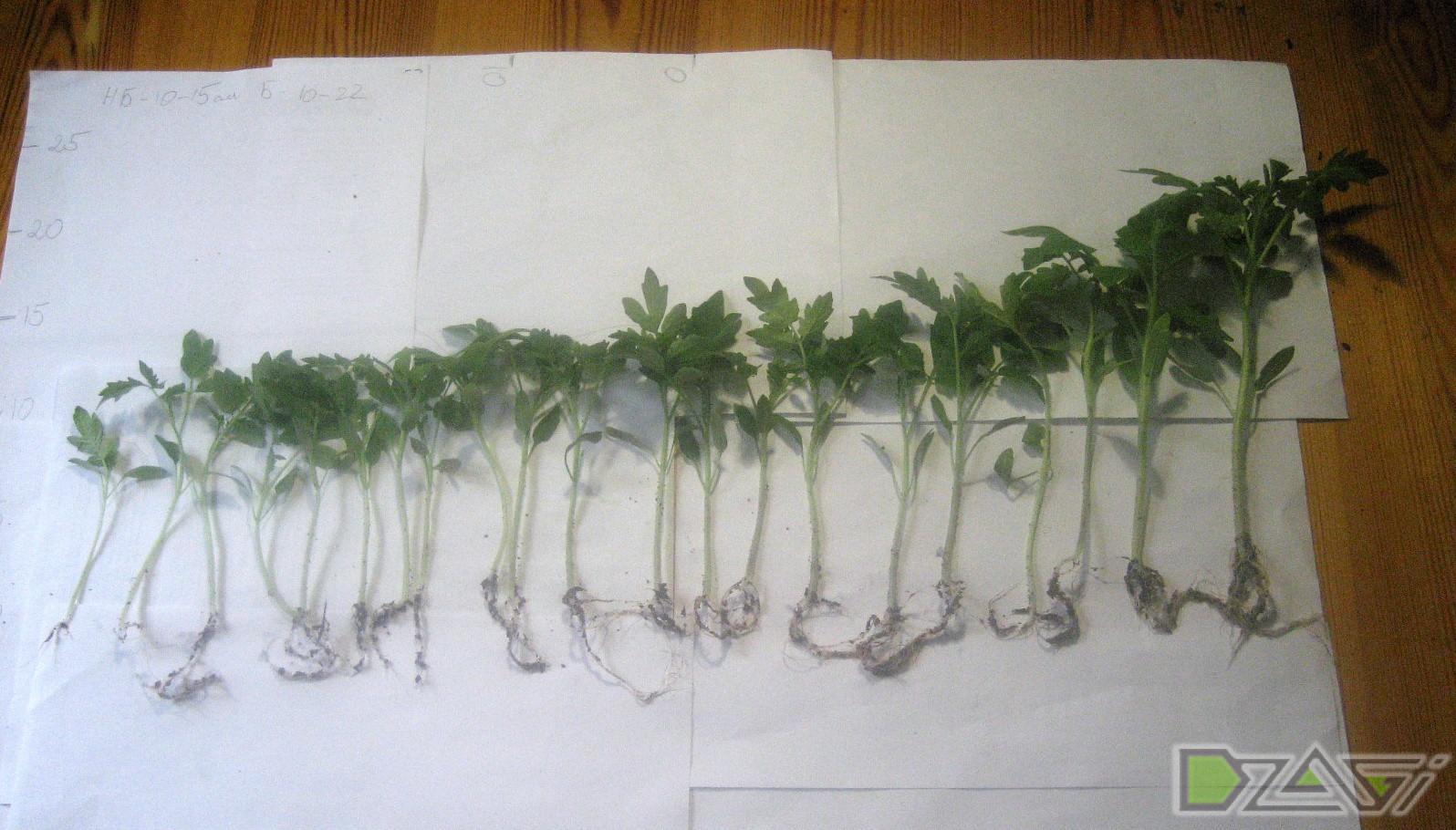 Удобрения для выращивания конопли 32